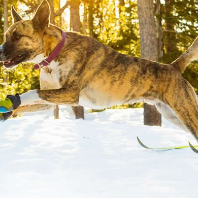thumb_Ruffwear-Polar-Trex-Dog-Boots-Side_adaptiveResize_390_390.jpg