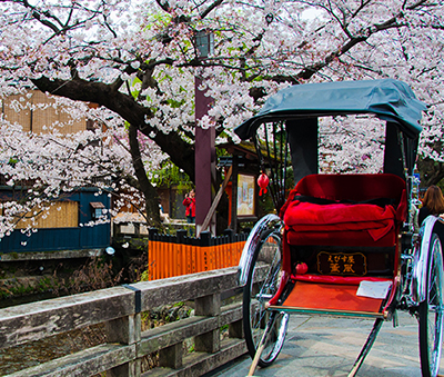 A rickshaw against a backdrop of cherry blossoms in Kyoto