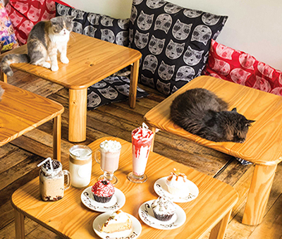 Cats lounging about in Miao Cat Cafe