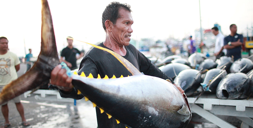 Weighing yellowfin tuna at the fish port