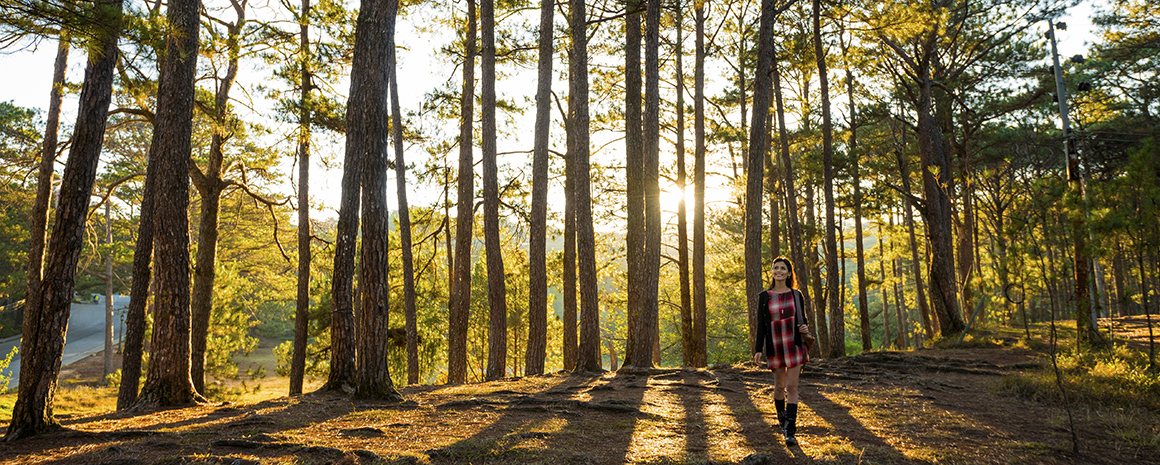 Conserving Nature And Culture In Baguio Waytogo