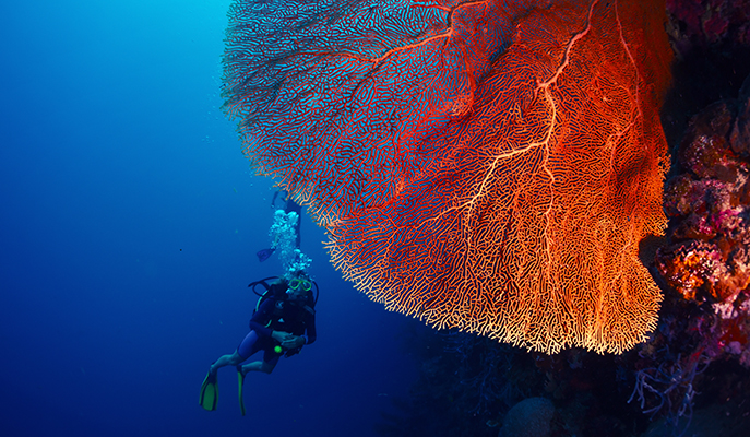 A diver exploring a bright tropical reef (Photo: Dudarev Mikhail)
