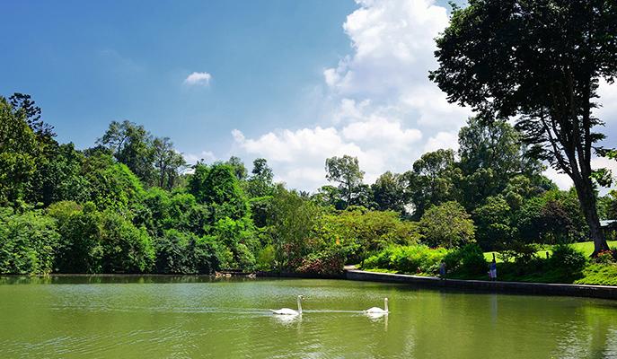 Swan Lake, Botanic Gardens Singapore