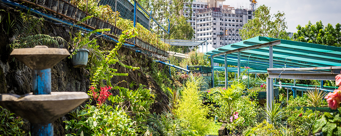 A green paradise thrives in the middle of the city