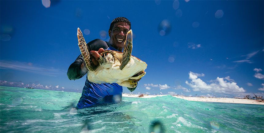 Green sea turtles can weigh up to 100kg