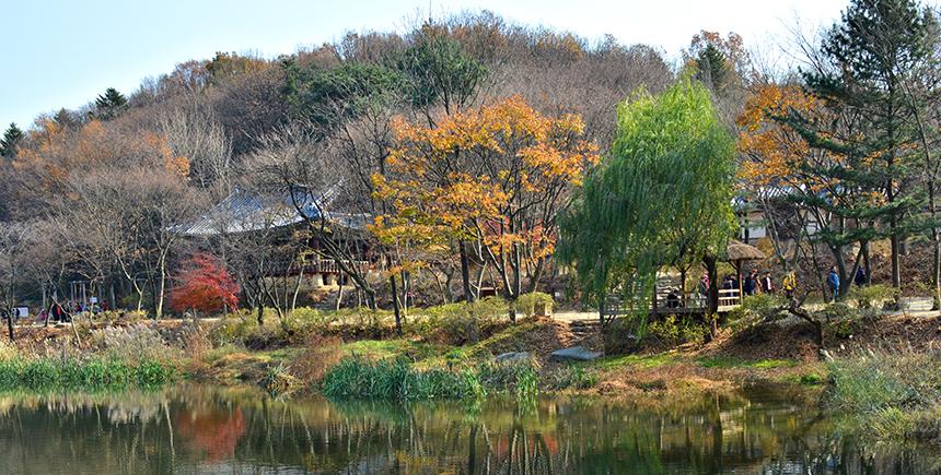 A serene late-autumn gardenscape