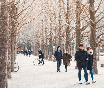 One of the many tree-lined trails on Nami Island (Photo: T. Dallas / Shutterstock.com)