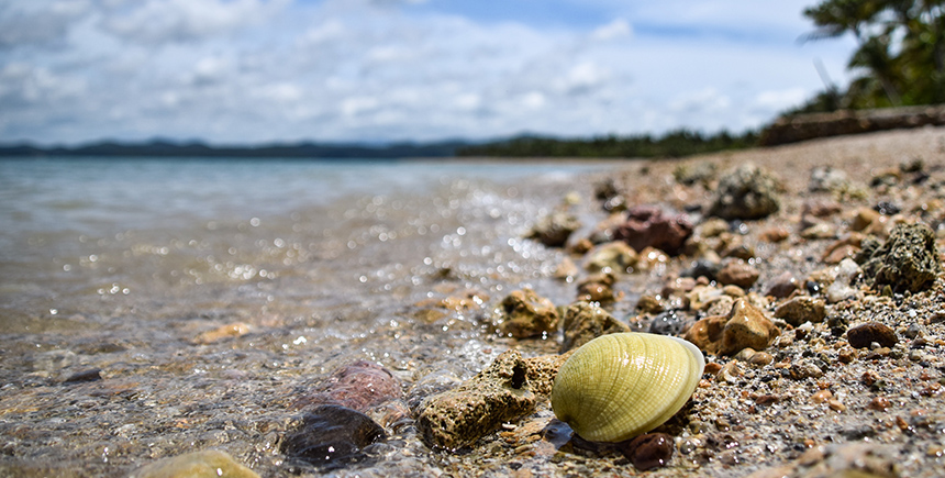 The ochre shores of Malawmawan Island are littered with shells