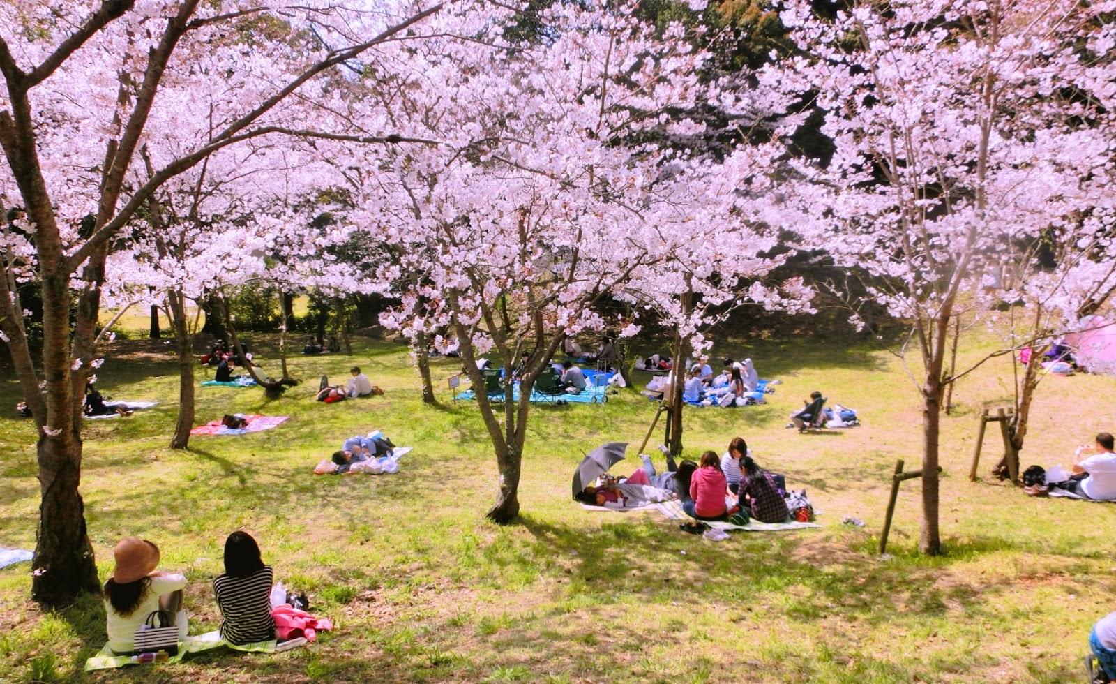 Musim Semi di Jepang Telah Datang. Berikut Pertandanya! | WeXpats Guide