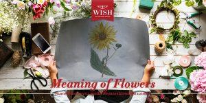 ค้นหาความหมายของ ดอกไม้ ที่คุณอาจไม่เคยนึกถึงมาก่อน