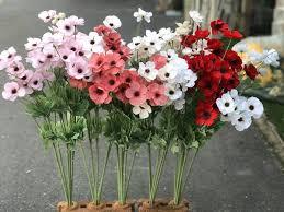 20 ดอกไม้วันวาเลนไทน์ บอกรัก แทนความในใจ