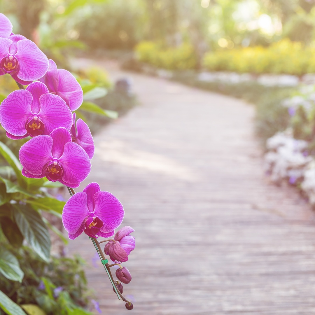 20 ดอกไม้มงคลช่วยเสริมดวงชีวิตเจริญรุ่งเรือง