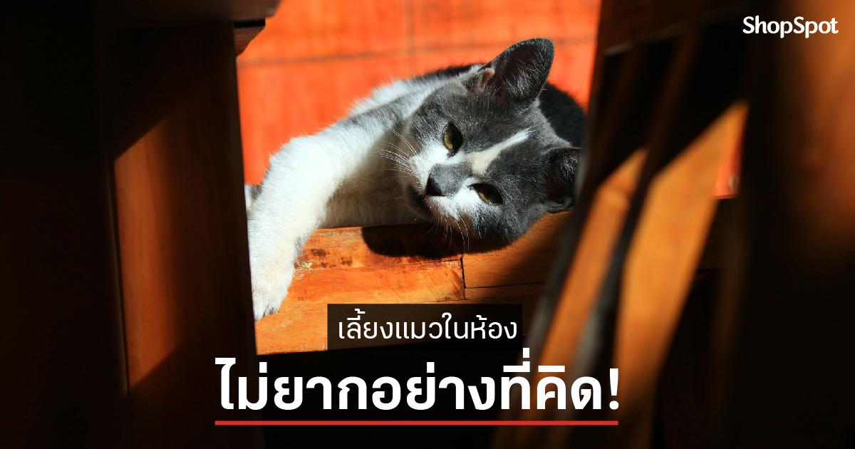 เลี้ยงแมวในห้องยังไงดี