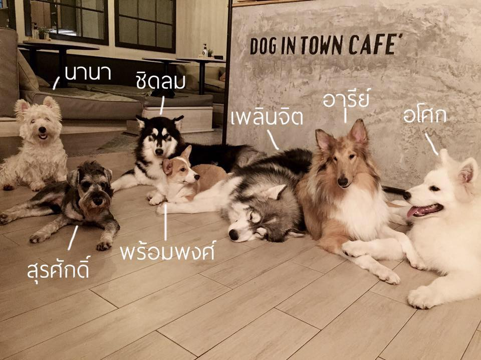 dog-in-town-5