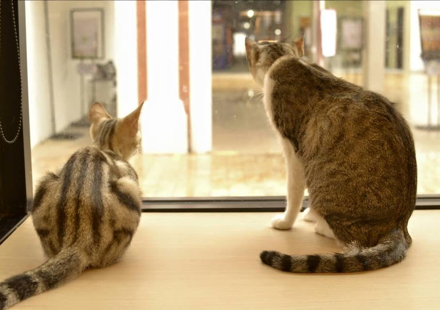 cat-up-5