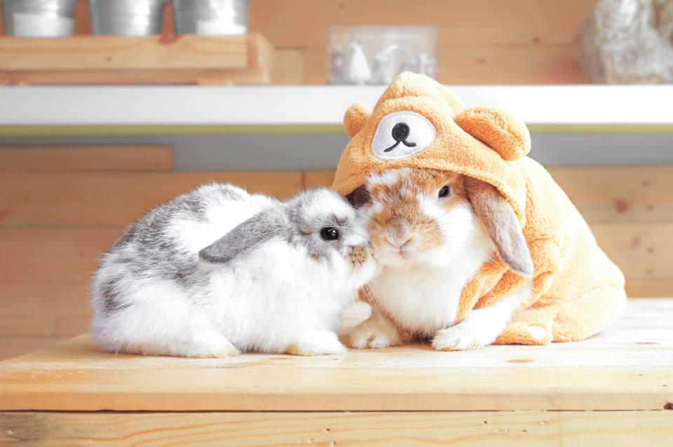 rabbito-6