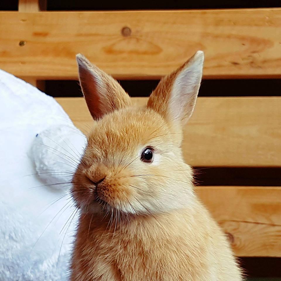 rabbito-2