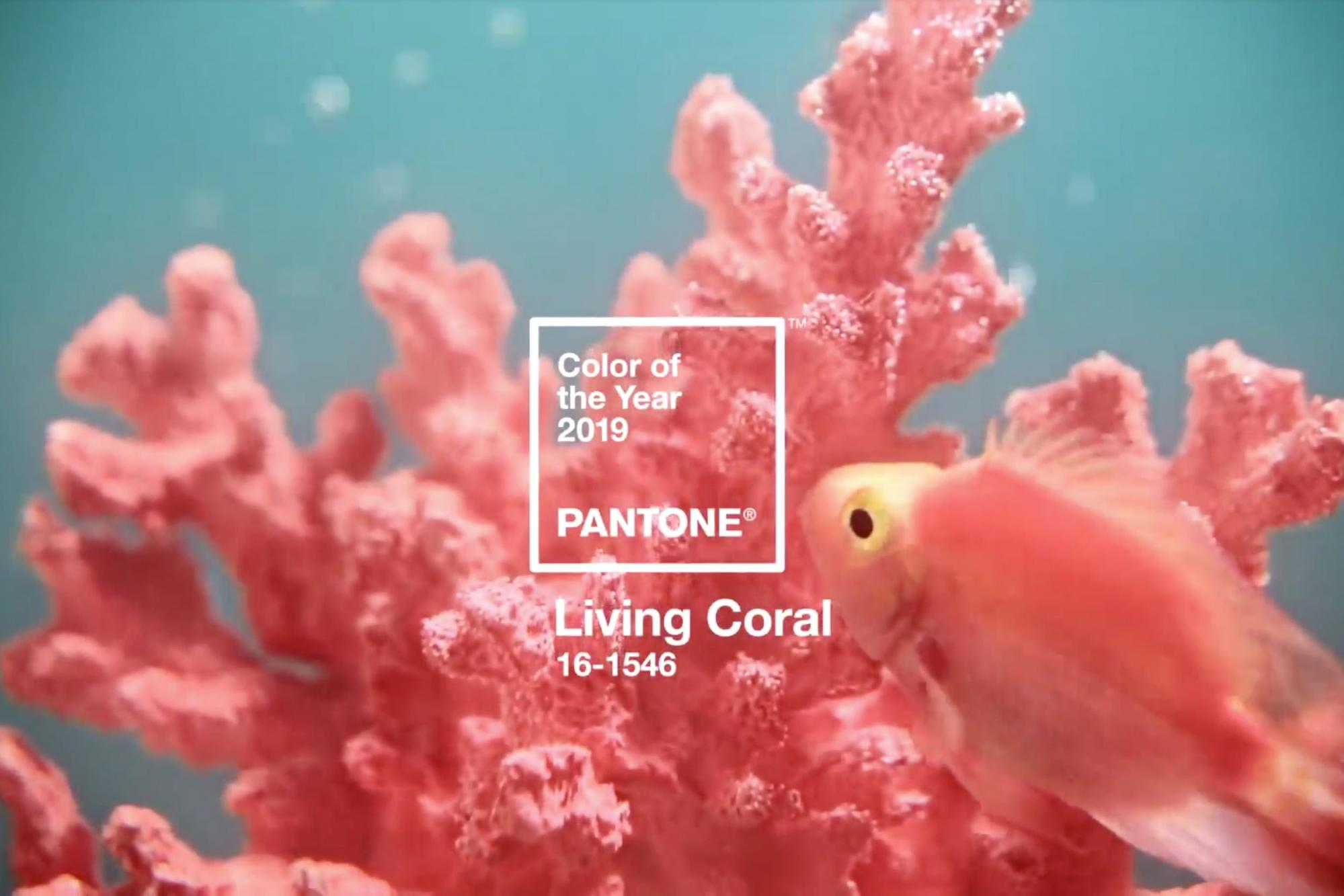 Living-Coral-Men-Looking-Guide2