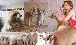 5 คาเฟ่สัตว์สุดมุ้งมิ้ง เอาใจคนรักน้องงงง