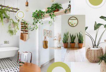 แต่งบ้านสไตล์ Greenery ง่าย ๆ ด้วย 7 ต้นไม้สุดแนวที่ปลูกได้ในบ้าน