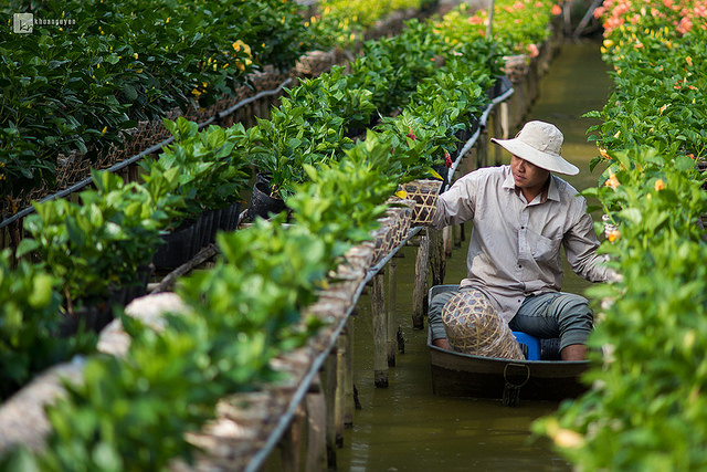 Khoa Nguyen - trong hoa.jpg
