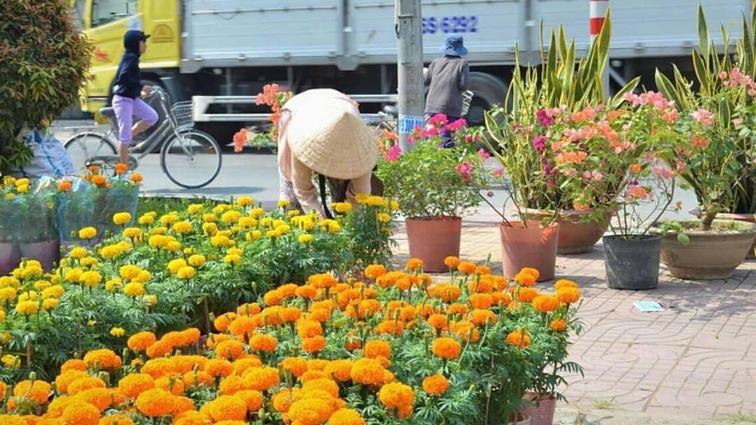 cho hoa.jpg