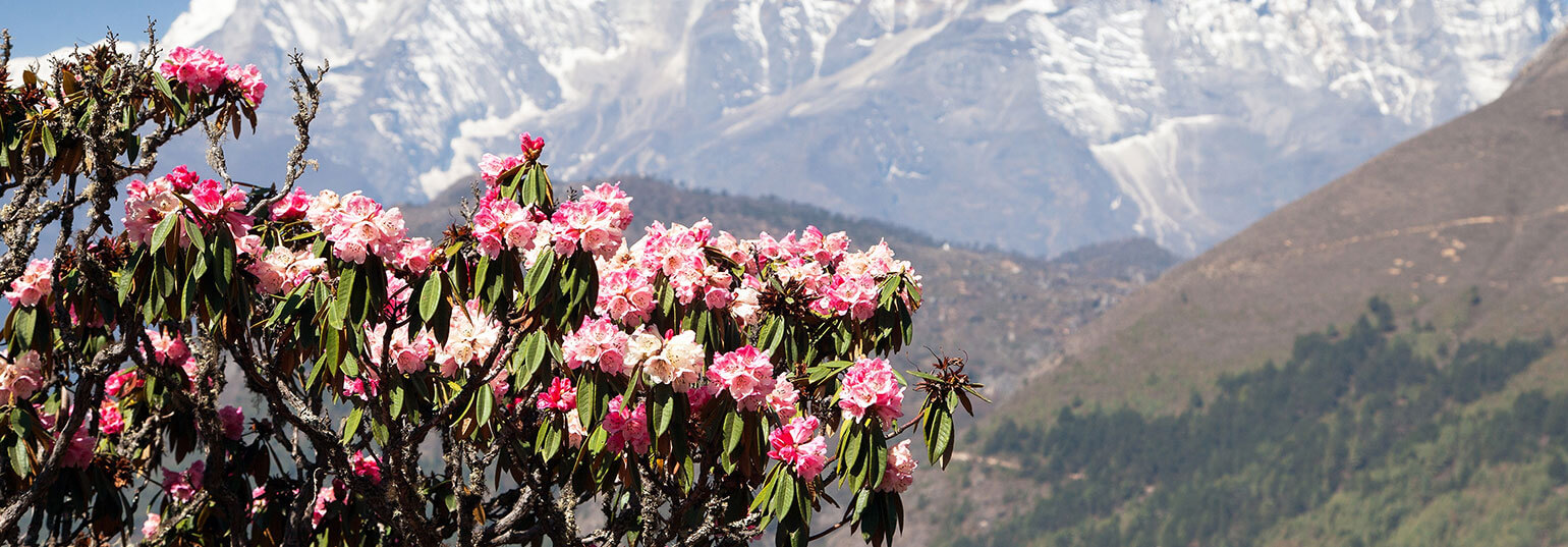 6 FLORAL VALLEYS TO VISIT IN INDIA THIS MONSOON