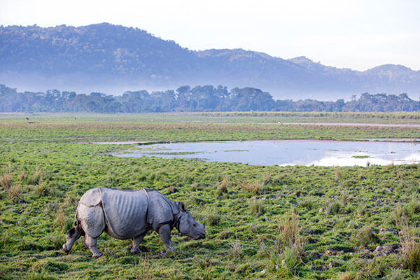 kaziranga national park budget friendly place in north east