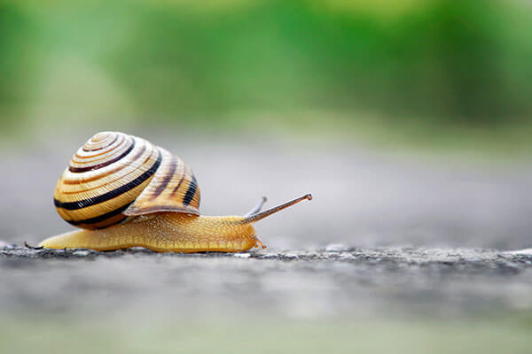 snail mucus bizarre ingredient in beauty product
