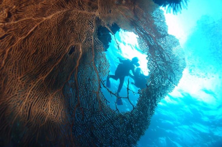 5d4n Wakatobi Diving Package In Wakatobi