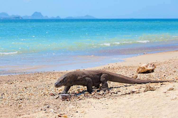 Komodo Island Tour Package