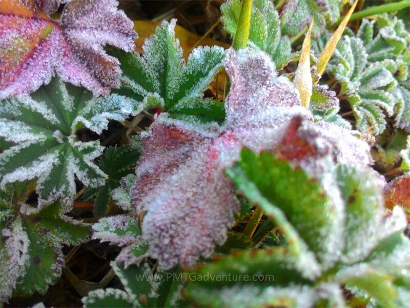 Kristal es (Bunga es) menyelimuti daun rerumputan di Camp Dampo Awang
