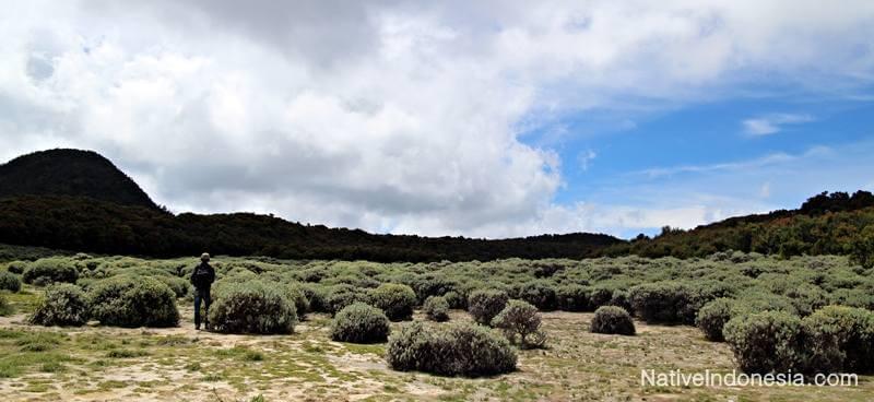 gunung Papandayan - Tegal Alun Padang Edelweis. Sumber: NativeIndonesia