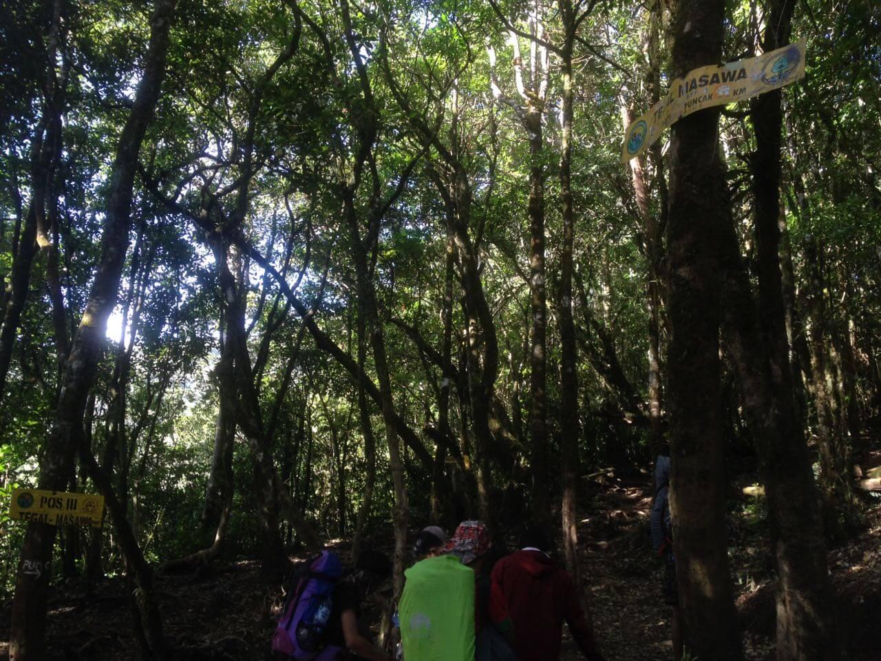 Pos 3 Tegal Masawa, Gunung Ciremai via Apuy (Foto oleh : @afvendiant)