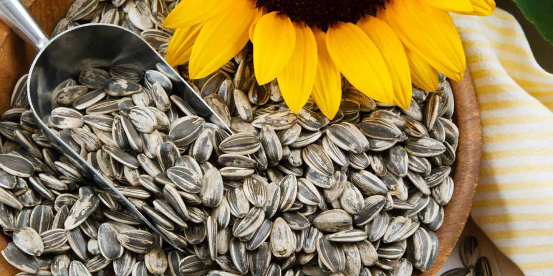 [Moms - Food & Nutrition] Camilan Sehat, Konsumsi Biji Bunga Matahari Yuk!