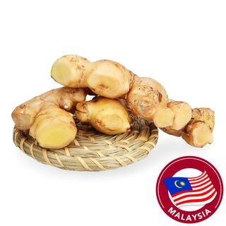 Pasar Malaysia Young Ginger