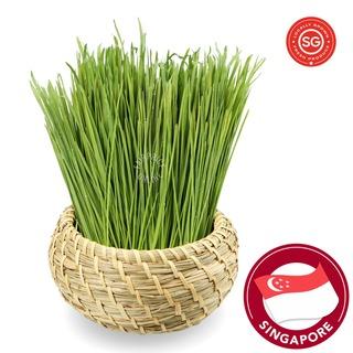 P&L Fresh Vegetable - Wheat Grass