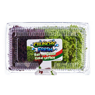 Crunchy Fresh Coral Lettuce - Red & Green