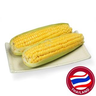 Pasar Thailand Corn of Cob