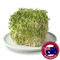 Sydney Bean Alfalfa Sprouts