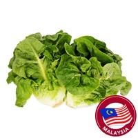 Budget Romaine Lettuce