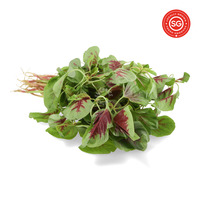 Pasar Malaysia Red Spinach