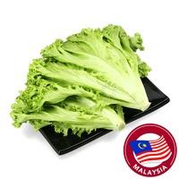 Crunchy Fresh Lollo Bionda Lettuce