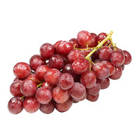 Egypt Red Seedless Grapes