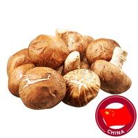 Chef Shiitake Mushroom