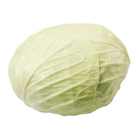 Gold Round Cabbage