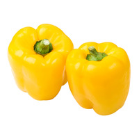 Gold Yellow Capsicum