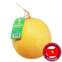 Unifarm Musk Melon