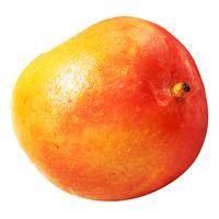Calypso Australia Mango