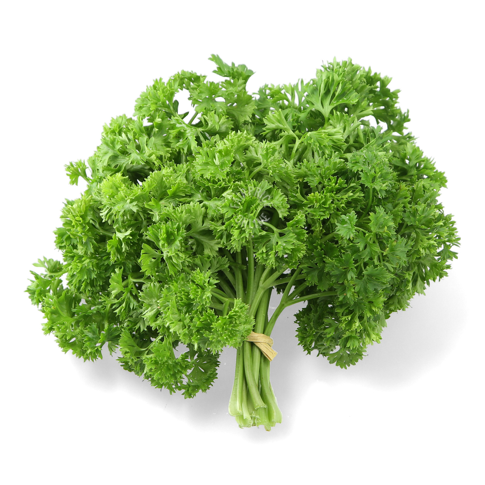 Pasar Malaysia English Parsley